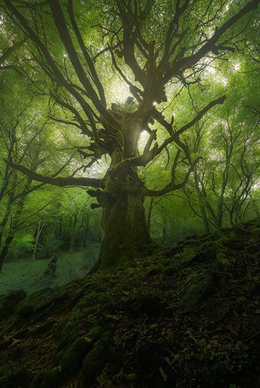 The King Of Forest Despues 550px