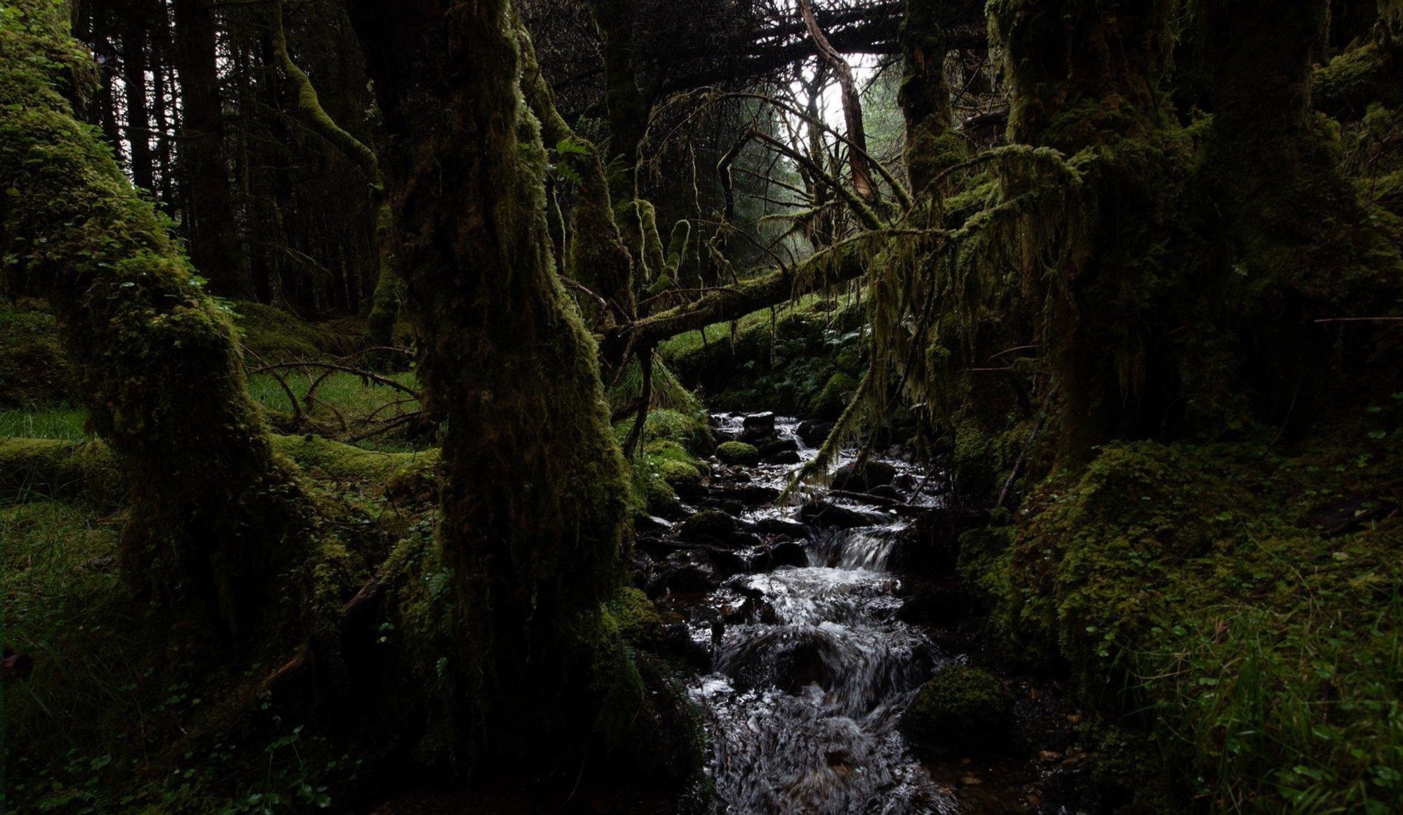 Hidden Wood Antes