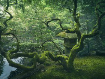 dark processing japenese tree