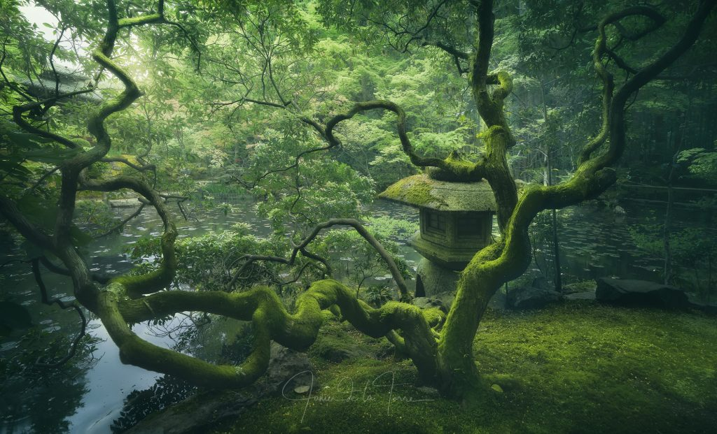 Japanese Tree 1024x621