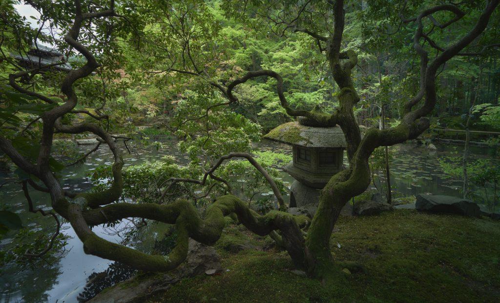 Japanese Tree Before 1024x621