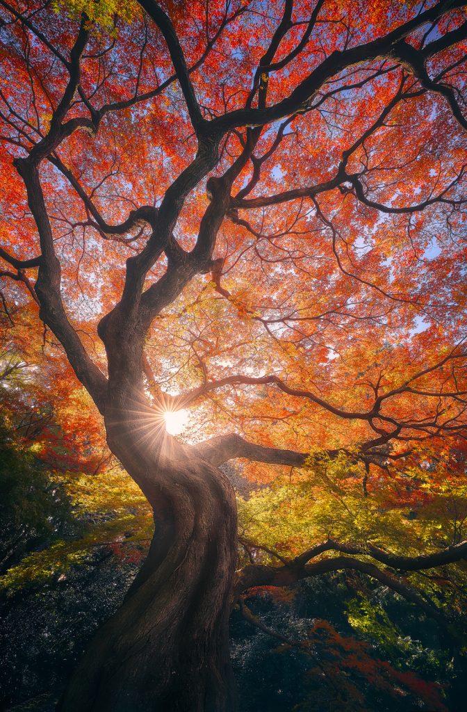 The Japanese Tree II