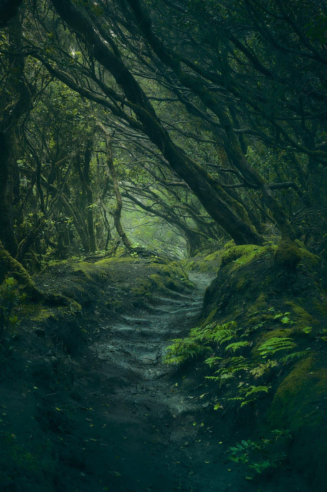 Entering Fangorn